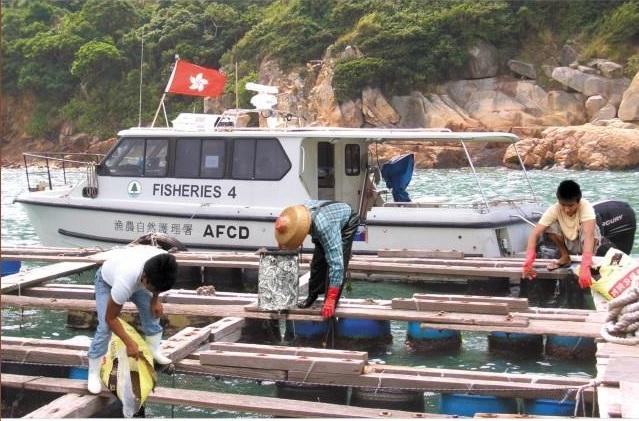 مدیریت غذای ماهی در مزارع پرورش ماهی