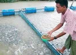 برنامه کاری پرورش ماهی در سیستم مدار بسته